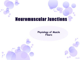 Neuromuscular Junctions Physiology of Muscle Fibers