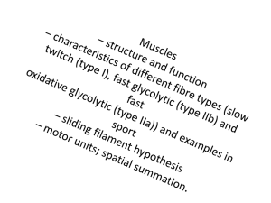 fast and slow twitch fibres coloring pages | Muscle Fibre Types