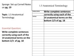 Printables Anatomical Terminology Worksheet anatomical terminology worksheet tchs chapter 1 5 terminology