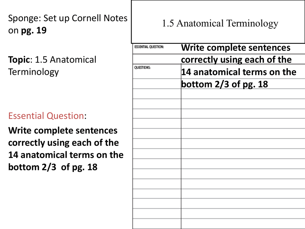 Chapter 15 Anatomical Terminology – Anatomical Terminology Worksheet
