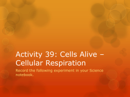 Activity 39: Cells Alive * Cellular Respiration