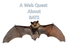 Bat Web Quest