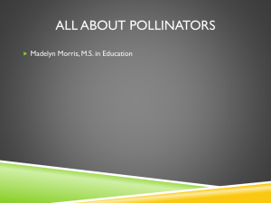 Pollinator PowerPoint by Madelyn Morris