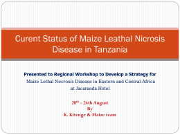 Curent Status of Maize Leathal Nicrosis Disease in