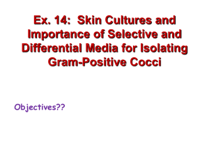 Ex. 13: Selective Media for Isolating Gram