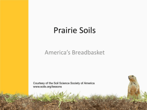 Prairie Ecosystem Gizmo