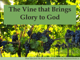 The Vine that Bring Glory to God