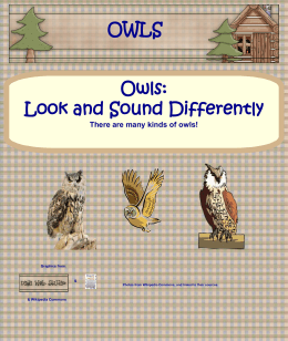 OWLS - Wise Owl Factory
