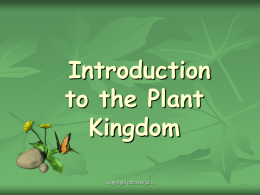 Introduction to Plants PPT