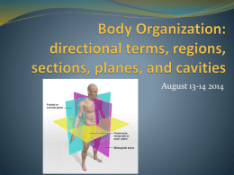 Body Organization: regions, sections, planes, and