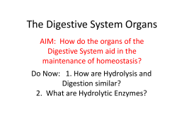 The Digestive System Organs