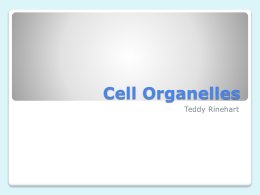 Cell Organelles - Monroe County Schools