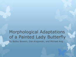 Morphological Adaptations Powerpoint