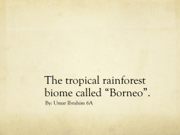The Borneo biome - 18-108