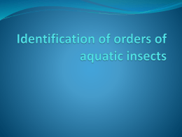 Identification of Orders of Aquatic Insects