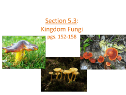 Section 5.3: Kingdom Fungi pgs. 152-158