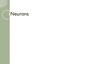 31.1 Really Neurons