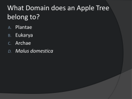 What Domain does an Apple Tree belong to?
