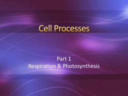 Cell Processes 2 Respiration Photosynthesis