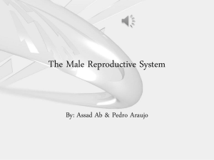 The Male Reproductive System. Assad & Pedro