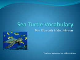 Sea Turtle Vocabulary