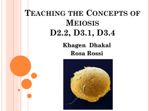 Concept presentation meiosis revised rosa khagal
