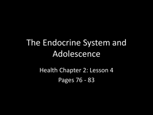 The Endocrine System and Adolescence