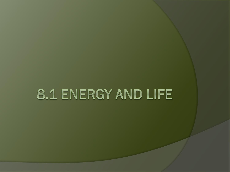 8 1 Energy And Life Worksheet Answer Key - worksheet