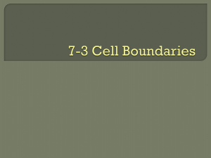 7.3 Cell Boundaries
