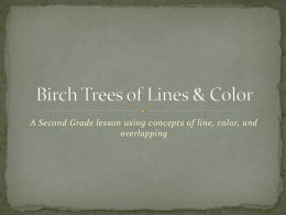Birch Trees of Lines & Color