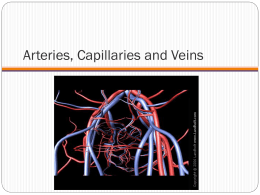 Arteries, Capillaries and Veins