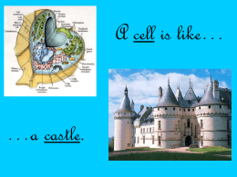 A Cell Is Like A Castle