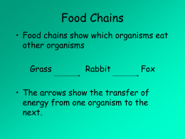Food chains Nemo