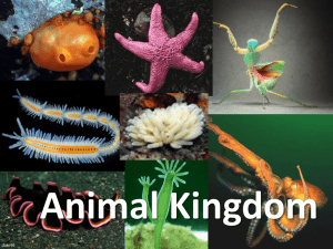 Animal Kingdom - Science at NESS