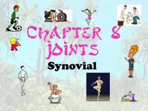 Joints - Synovial