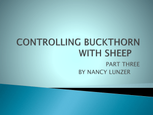 controlling buckthorn with sheep - Sustainable Agriculture Research