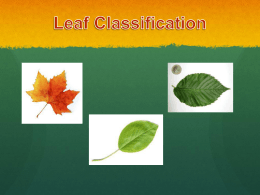 Leaf Classification - Normandie Avenue ES
