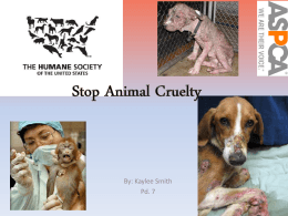Stop Animal Cruelty - kaylees