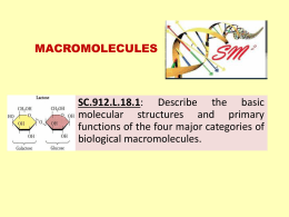 macromolecules - Science Math Master