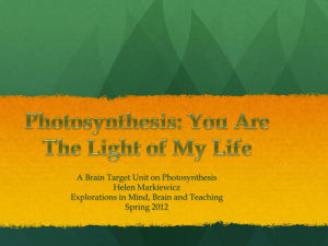 Photosynthesis - Brain