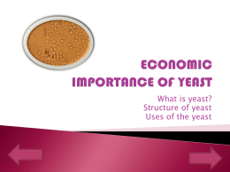ECONOMIC IMPORTANCE OF YEAST