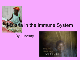 Malaria in the Immune System