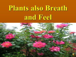project on plantsalso breathe and feel_9th_malkit