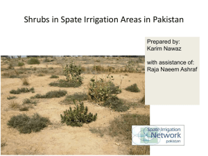 Shrubs in Spate Irrigated Areas in Pakistan