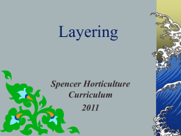 Layering - Spencer