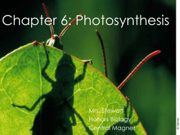 photosynthesis - Central Magnet School