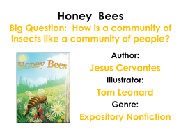 How is a community of insects like