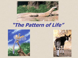 The Pattern of Life Slide Show