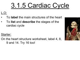 Cardiac Cycle - misslongscience
