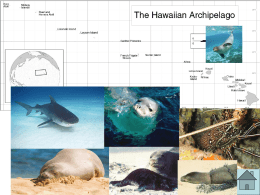 Hawaiian Monk Seals PowerPoint (PPT - 4.8 MB)